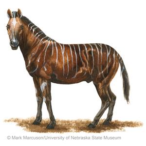 Horses | Paleo Sleuths
